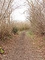 Bridleway, Green Lane from White End to Chesham - geograph.org.uk - 116385.jpg