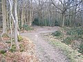 Bridleway junction in Great Leybourne Wood - geograph.org.uk - 1200201.jpg