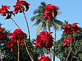 Bright red flower.jpg