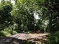 Bringer's Park Plantation - geograph.org.uk - 489192.jpg