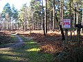 Broadwater Forest - geograph.org.uk - 694537.jpg
