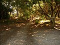 Brownsea Island, path to the beach - geograph.org.uk - 1445891.jpg