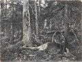 Bruno Liljefors - Björn med nedlagt byte 1890.jpg
