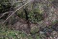 Buchenstumpf-Ponorbachdoline 01.jpg
