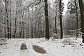 Buchholzer Forst 31.JPG