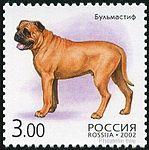 Bull-Mastiff-Canis-lupus-familiaris Russia 2002.jpg