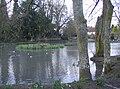 Buriton Pond - geograph.org.uk - 356101.jpg