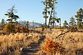 Burnt Mesa Trail (5500607556).jpg