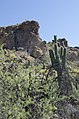 Butcher Jones Trail, Burro Cove and Beyond, Tonto National Park, Arizona - panoramio (47).jpg