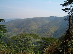 Bwindi Impenetrable National Park-112364.jpg