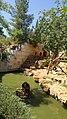 By ovedc - Animals in Jerusalem Biblical Zoo - 08.jpg