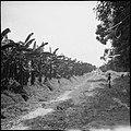 CH-NB - Belgisch-Kongo, Thysville (Mbanza Ngungu)- Landschaft - Annemarie Schwarzenbach - SLA-Schwarzenbach-A-5-26-022.jpg