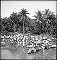 CH-NB - Portugal, San Thomé (São Tomé und Príncipe)- Menschen - Annemarie Schwarzenbach - SLA-Schwarzenbach-A-5-25-009.jpg