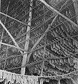 COLLECTIE TROPENMUSEUM Kijkje in een schuur met tabaksbladeren die hangen te drogen op de tabaksonderneming Tandjong Morawa te Serdang Oost-Sumatra. TMnr 60047700.jpg