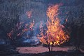 CSIRO ScienceImage 1328 Bush fire.jpg