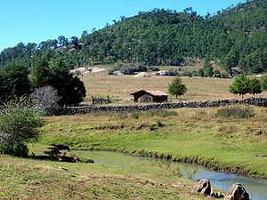 Tapalpa - Countryside with forests.
