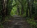 Caminho na floresta.jpg