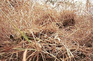 Fieldcraft - A camouflaged sniper lying prone