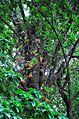 CanonBall treebark.jpg