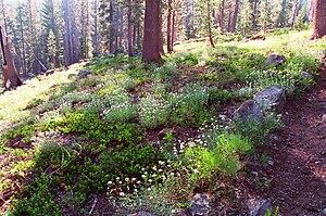 Caribou Wilderness - Caribou rock garden