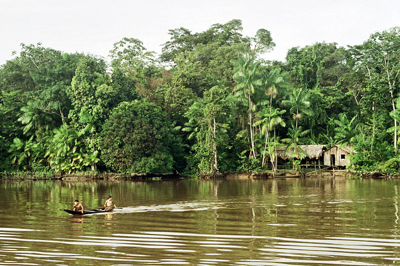 see: the Amazon Rainforest