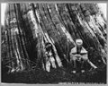Cascade Mountains, near Seattle, Wash.- (Samson, an old sasquatch Indian, seated in front of a huge tree trunk) LCCN2004665692.jpg