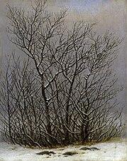 Arbres et arbustes sous la neige