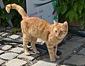 Cat (30072497623).jpg