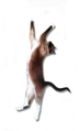 Cat Stretch.png