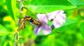 Caterpillar;national botanical garden Bangladesh.png