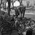 Cegléd 1972, elefánt. - Fortepan 87646.jpg
