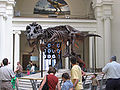 Chicago Illinois - Sue the TRex- Field Museum2.jpg
