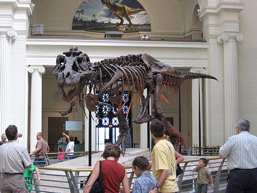 Chicago Illinois - Sue the TRex- Field Museum2