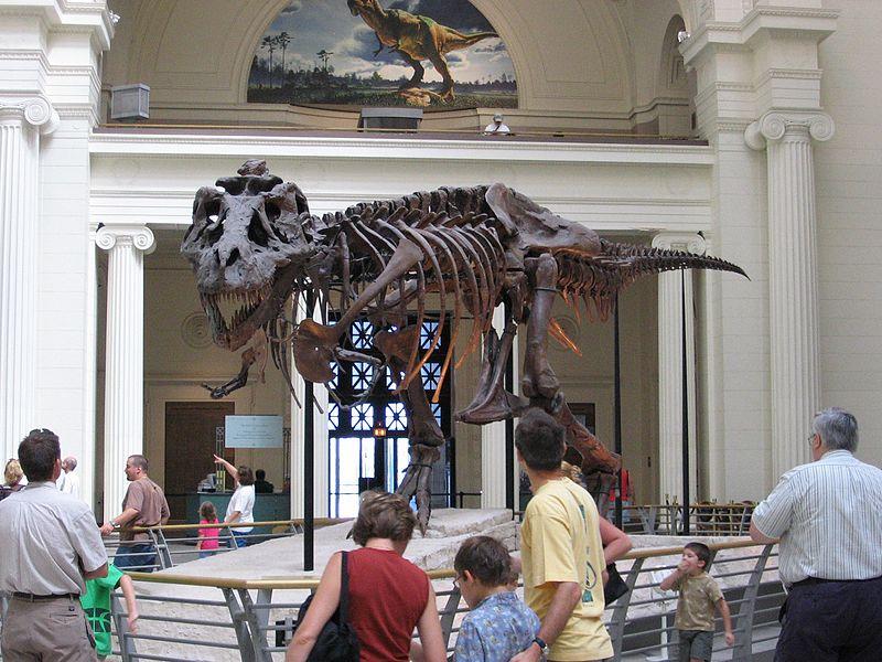 File:Chicago Illinois - Sue the TRex- Field Museum2.jpg