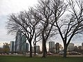 Chicago in the winter (4110410319).jpg