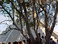 Chichen Itza Through the Trees.jpg
