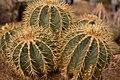Chihuahuan Desert Research Institute, Fort Davis (3488892697).jpg