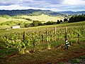 Child playing by the vineyard at Sweet Cheeks Winery.jpg