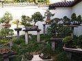 Chinese Garden in Sydney (35).jpg