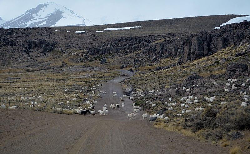 File:Chivos - panoramio.jpg
