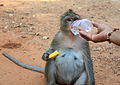 Chunky Monkey (4330995661).jpg