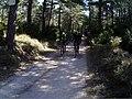 Ciclistes per pista a Els Ports 03.jpg