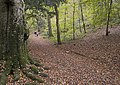 Cleeve Wood - geograph.org.uk - 277091.jpg