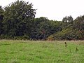 Clough woodland near Belleair - geograph.org.uk - 250852.jpg
