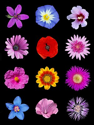 Colored flowers b.jpg
