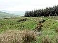 Corner of forest - geograph.org.uk - 492085.jpg