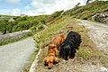 Cornish coast path at Bessy's Cove - geograph.org.uk - 522399.jpg