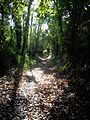 Coulaines - Chemin creux.JPG
