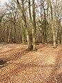 Cowcroft Woods - geograph.org.uk - 115459.jpg
