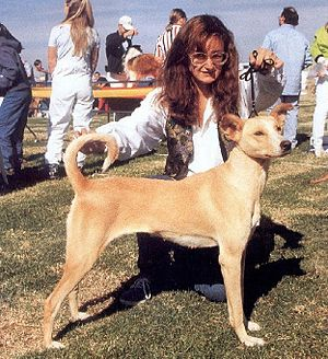 Cretan Hound - Cretan Hound at Athens Int. Show, October 1997